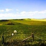 Shear Barn