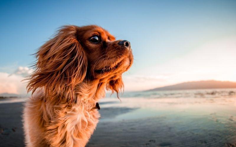 Motorhome Hire South West - Dog on the beach - Kintripper Motorhome Hire